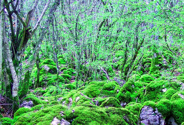 evento 5 cuentos bosque_2