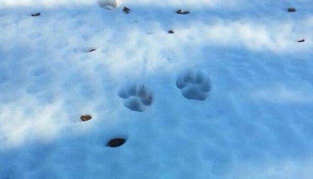 Huellas rastros fauna pirineo