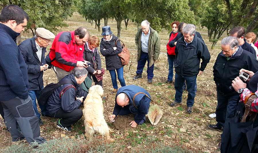 Visita y recogida de trufa en el campo
